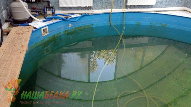 Чем почистить бассейн от зеленого налета в домашних условиях